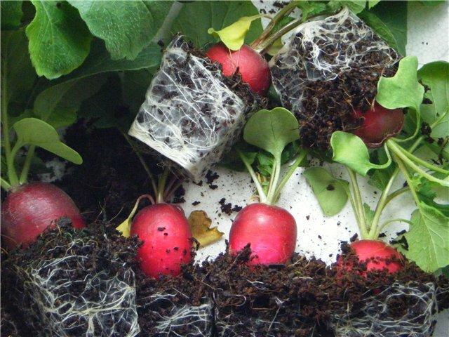 выращивание редиса на подоконнике кассетные емкости