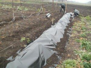 дуги для укрытия винограда