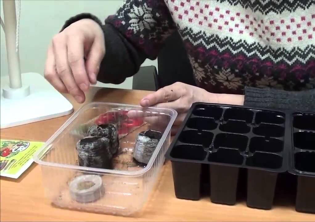 Подготовка семян помидор для рассады в домашних условиях 7