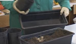 состав почвы для рассады