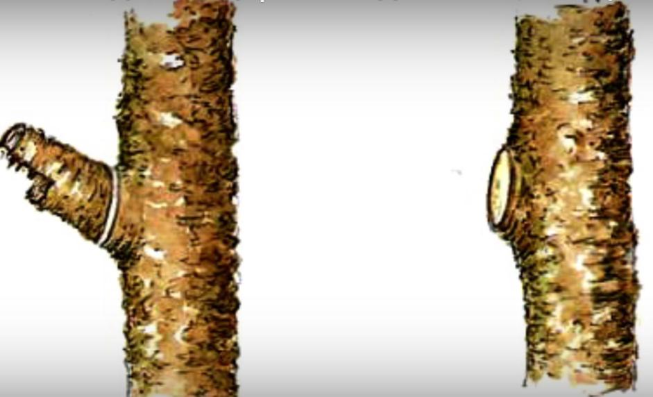 обрезка сухой ветки