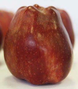 яблоко ред чиф