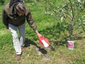 подкормка яблони ред чиф