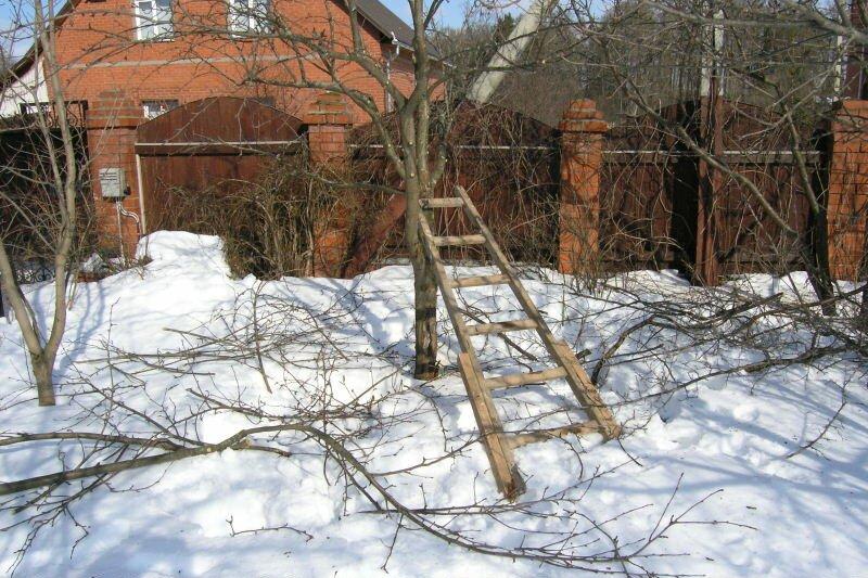обрезка груши зимой