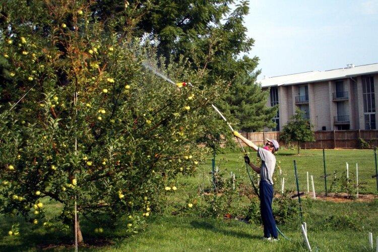 обработка яблонь от парши