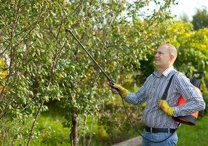 опрыскивание яблонь настоями
