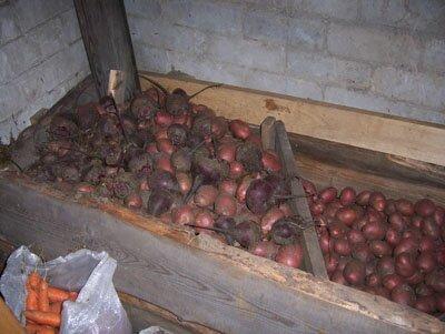 хранение картофеля и свеклы