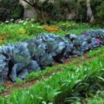 огород без вредителей