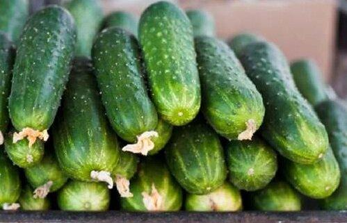 высокоурожайные сорта огурцов сорт темп F1