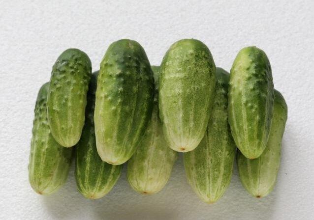 высокоурожайные сорта огурцов сорт ерофей