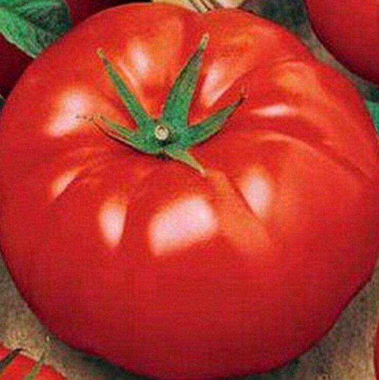 Урожайные сорта помидоров сорт биг бой
