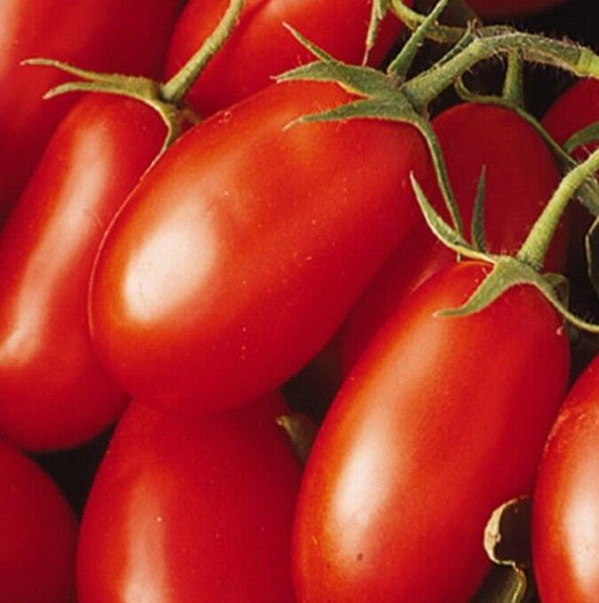 томаты красное изобилие