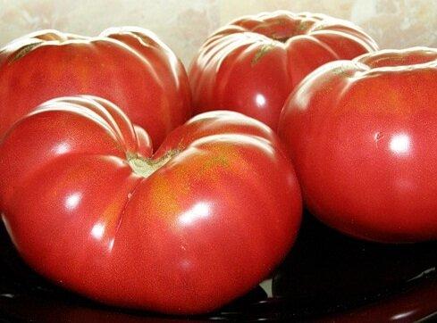 Урожайные сорта помидоров сорт бычий лоб минусинский