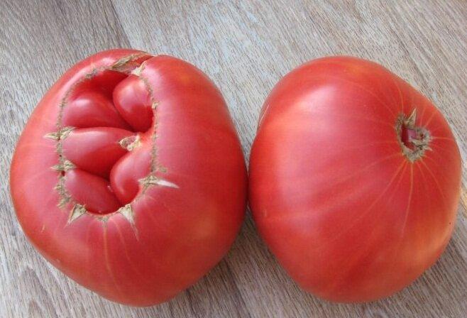 Урожайные сорта помидоров сорт гигант подмосковья