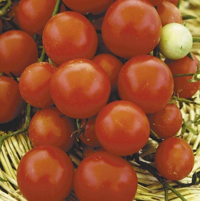 томаты флорида петит