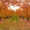 борьба с вредителями осенью