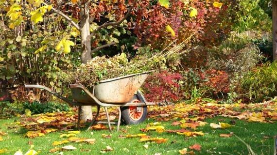 вывоз мусора из сада осенью