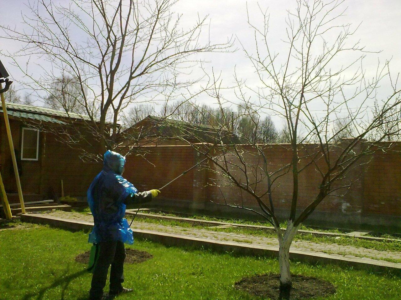 Опрыскивание деревьев