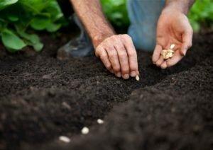 Посадка семенами